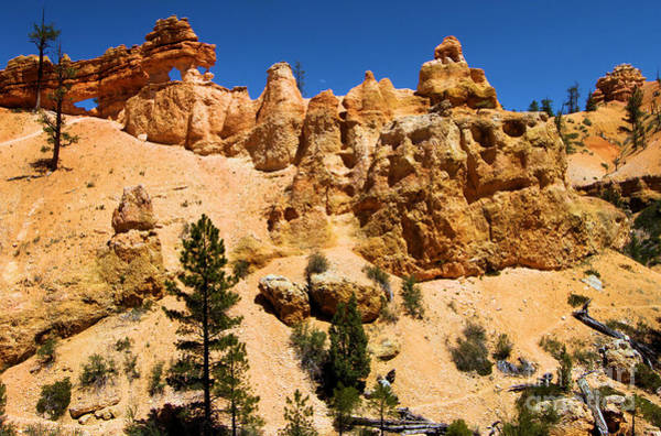 Photograph - Bryce Water Canyon Dragon by Adam Jewell