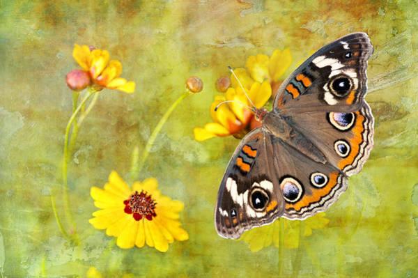 Buckeye Butterfly Wall Art - Photograph - Buckeye Butterfly In The Meadow by Bonnie Barry