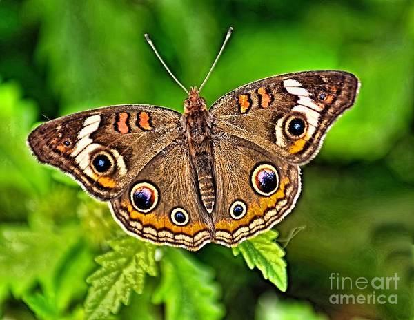 Buckeye Butterfly Wall Art - Photograph - Buckeye Butterfly by Nick Zelinsky