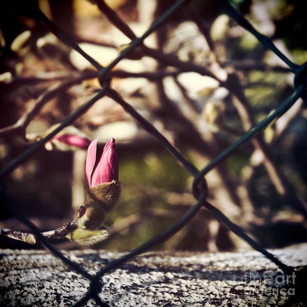 Photograph - Bud by Silvia Ganora