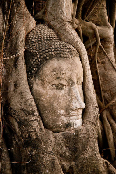 Photograph - Buddha Head Strangled By The Roots  by U Schade