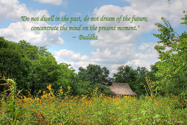 Photograph - Buddha Quote On Blue Sky Above Field Of Sunflowers by Sarah Broadmeadow-Thomas