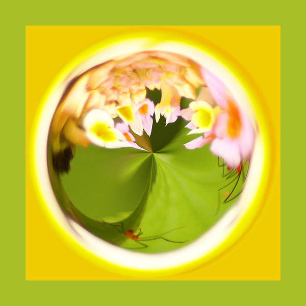 Photograph - Buggy Flower Orb by Bill Barber