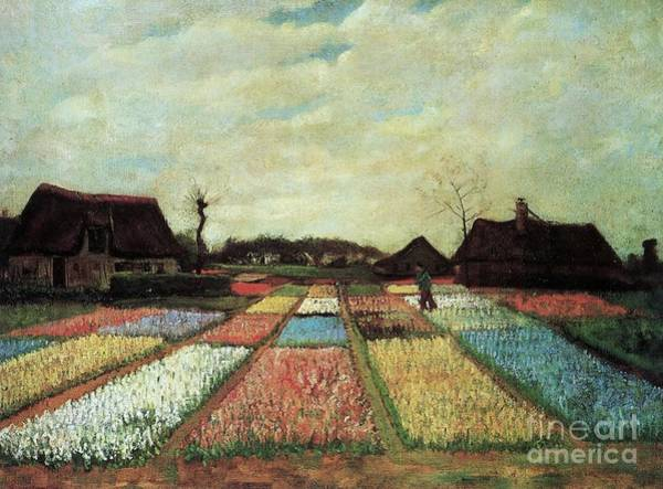 Dutch Tulip Painting - Bulb Fields by Pg Reproductions
