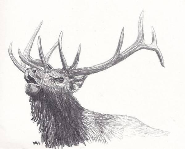 Bugling Drawing - Bull Elk by Nicole Grattan