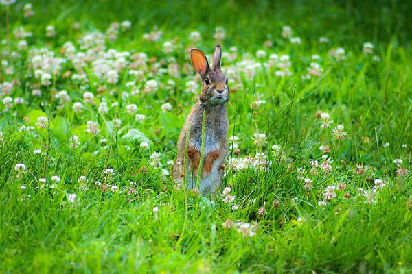 Photograph - Bunny by Emanuel Tanjala
