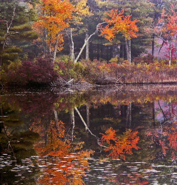 Photograph - Burge's Pond by Frank Winters