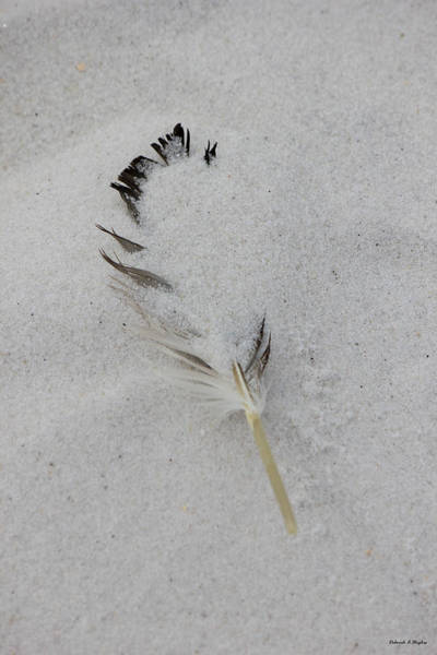 Buried Feather Art Print