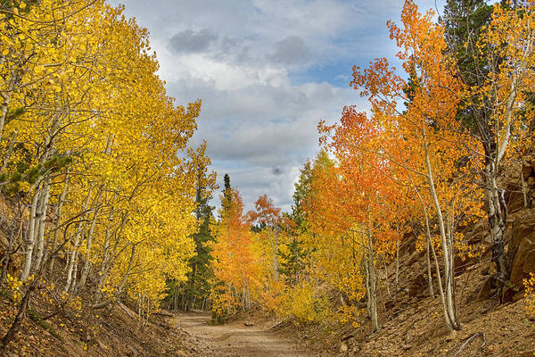 Photograph - Burning Orange And Gold Autumn Aspens Back Country Colorado Road by James BO Insogna