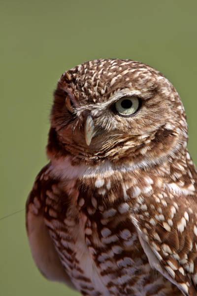 Wildlife Refuge Digital Art - Burrowing Owl Looking At You by Mark Duffy