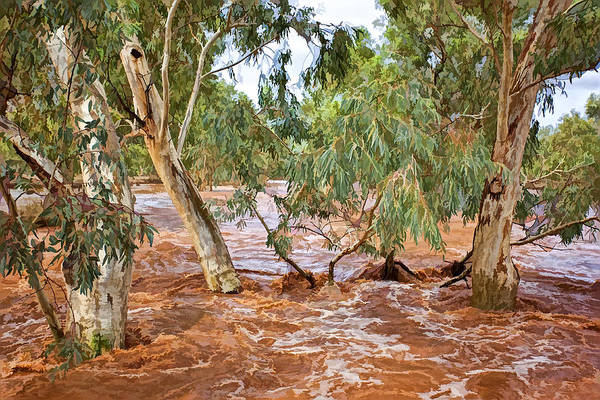 Photograph - Bush Flood by Paul Svensen