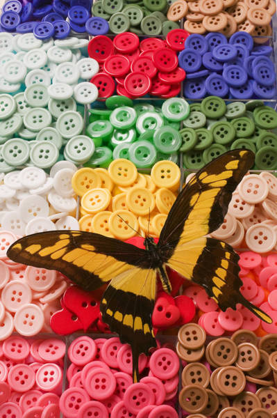 Compartments Photograph - Butterfly And Buttons by Garry Gay