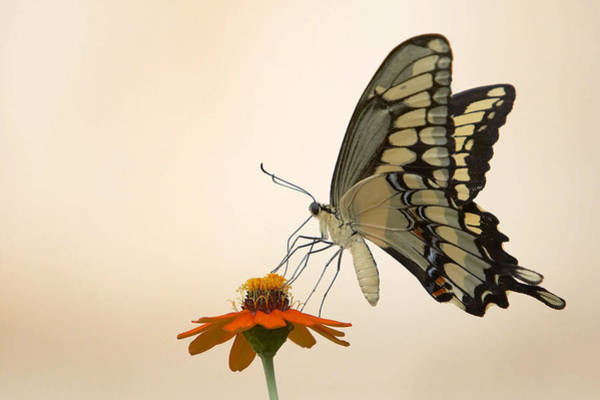Photograph - Butterfly And Flower by Jason Smith