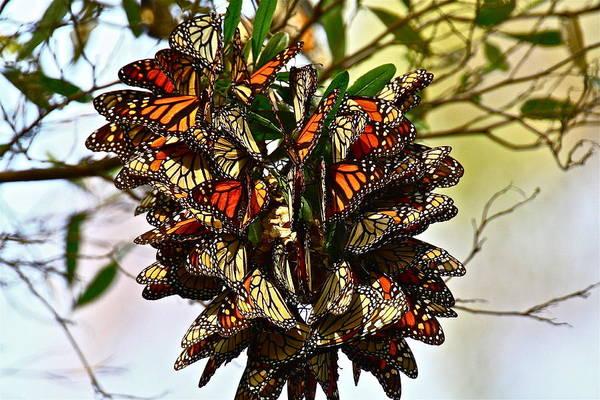 Butterfly Bouquet Art Print