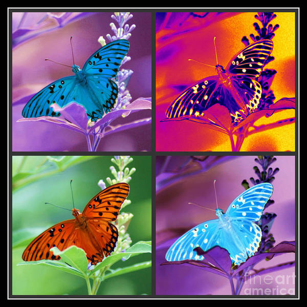 Photograph - Butterfly Collage by Donna Bentley