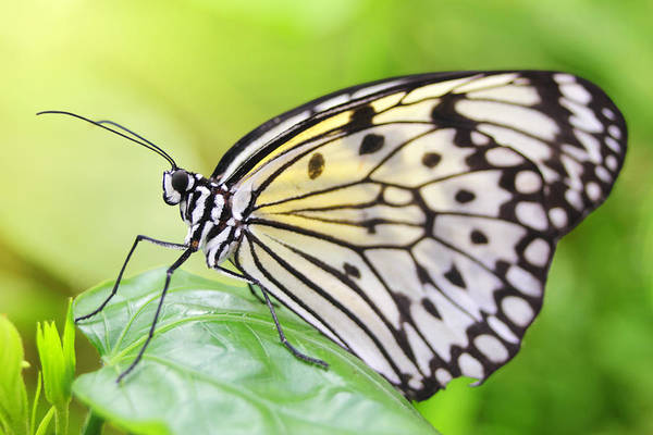 Photograph - Butterfly Dream by Marc Huebner