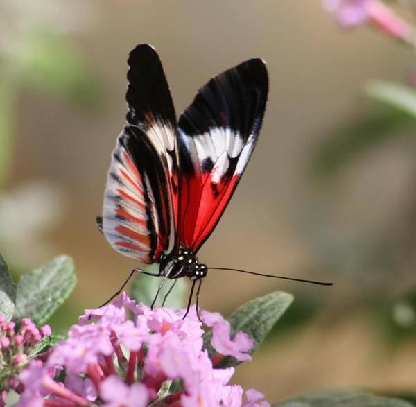 Butterfly Elegance Art Print by Valia Bradshaw
