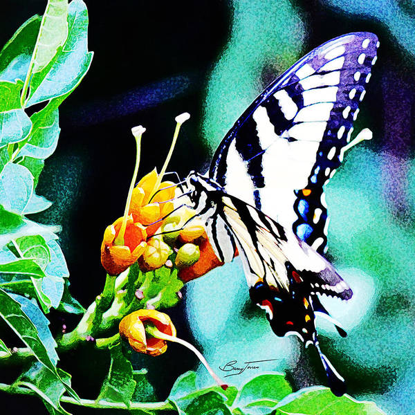 Photograph - Butterfly Haven by Barry Jones