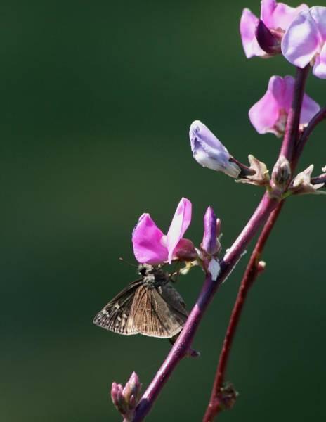 Wall Art - Photograph - Butterfly Kiss by Valia Bradshaw