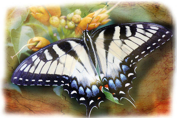 Photograph - Butterfly Kisses by Barry Jones