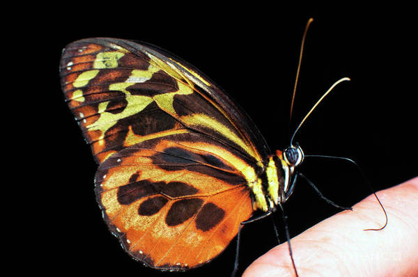Photograph - Butterfly On Finger by Thomas R Fletcher
