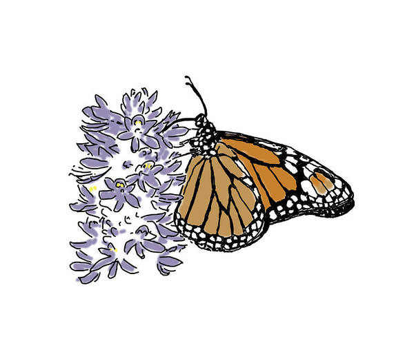 Drawing - Butterfly On Flower by Daniel Reed