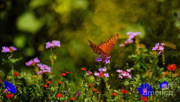 Photograph - Butterfly On Lavender  by John  Kolenberg