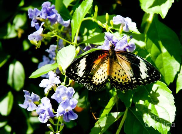 High Resolution Wall Art - Photograph - Butterfly by Shijun Munns