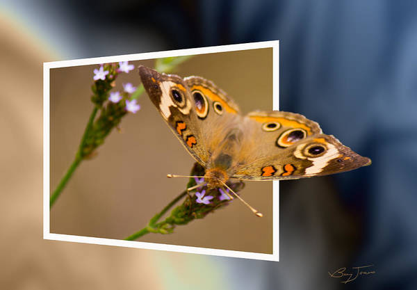 Photograph - Butterfly Stepping Out by Barry Jones