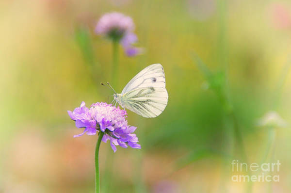 Umwelt Photograph - Butterfly by Tanja Riedel