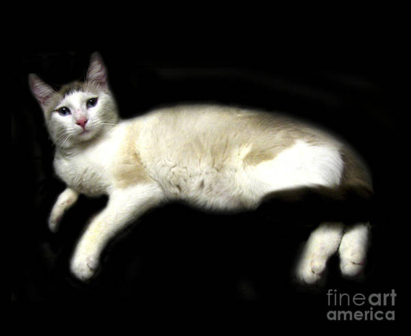 Tan Cat Wall Art - Digital Art - C-a-t In Repose  by Peter Piatt
