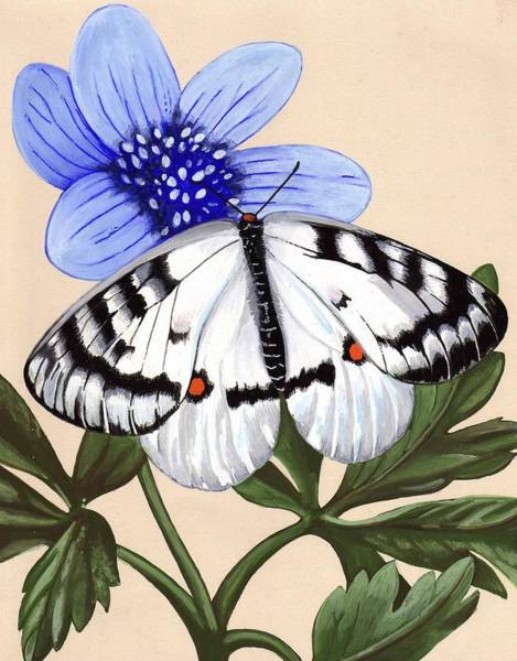 Cabbage White Painting - Cabbage White by Jeanne Rehrig