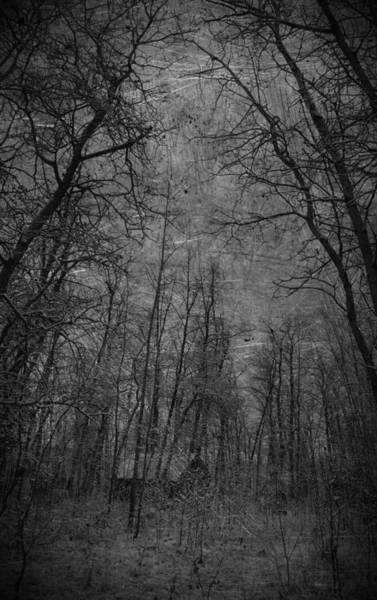 Cabin In The Woods Wall Art - Photograph - Cabin In The Woods by The Artist Project