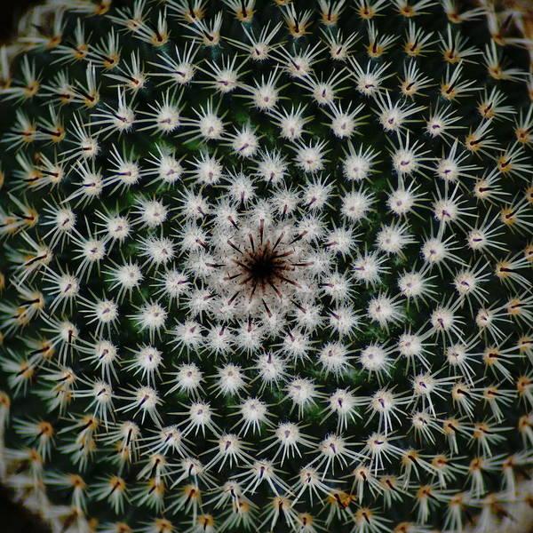 Photograph - Cacti by Ben Upham III