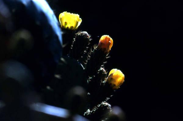 Photograph - Cactus Buds by Emanuel Tanjala