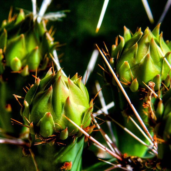Photograph - Cactus Plant by David Patterson
