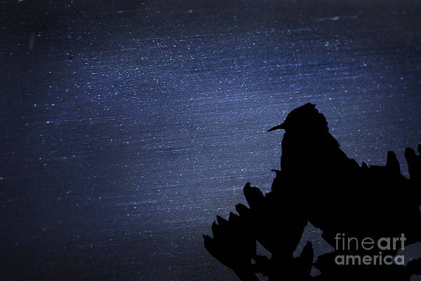 Photograph - Cactus Wren In The Night by Donna Greene