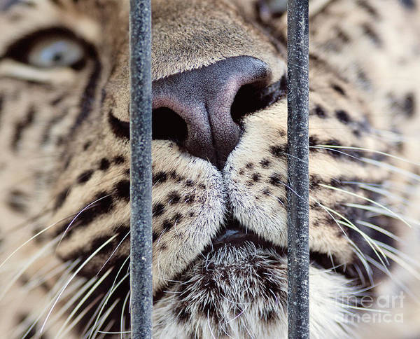 Photograph - Caged by Pam  Holdsworth