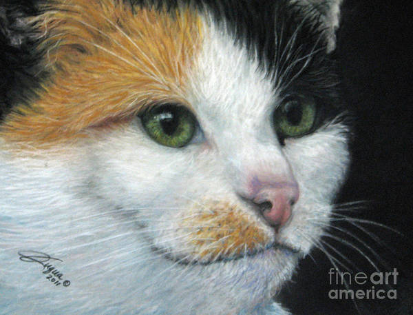 Wall Art - Pastel - Calico Dreams by Beverly Fuqua
