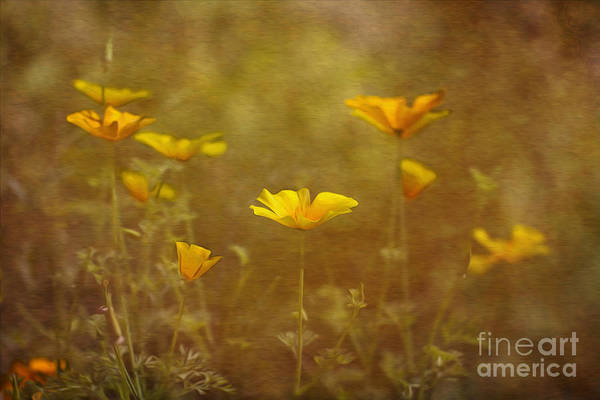 Photograph - California Poppies. by Clare Bambers
