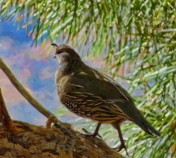 Mixed Media - California Quail by Frank Lee Hawkins Eastern Sierra Gallery