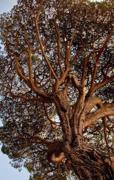 Wall Art - Photograph - California Tree by Patrick  Flynn