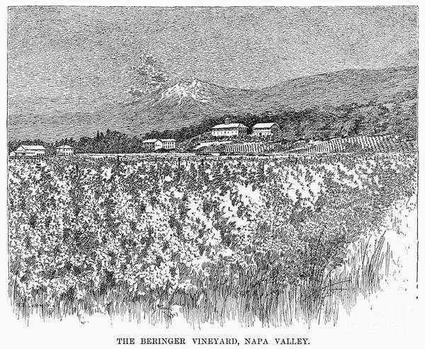 Wall Art - Photograph - California: Vineyard, 1889 by Granger