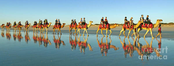 Broome Photograph - Camel Train by Raoul Madden