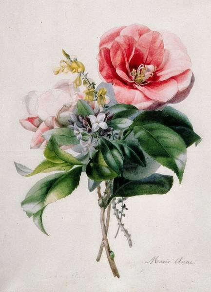 Broom Wall Art - Painting - Camellia And Broom by Marie-Anne
