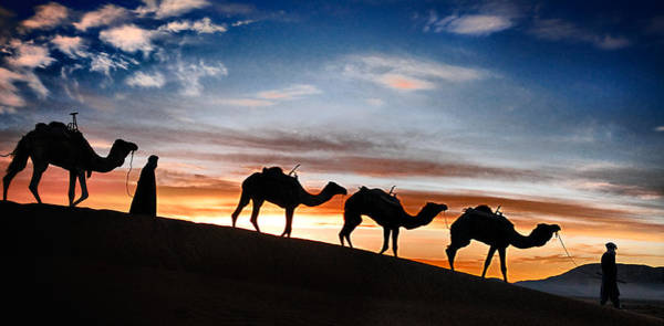 Photograph - Camels - 2 by Okan YILMAZ