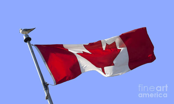 Wall Art - Photograph - Canadian Flag by Blink Images