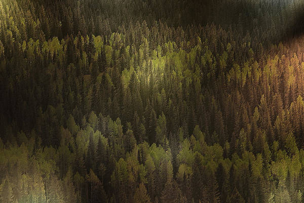 Photograph - Canadian Forest - The Woods Are Lovely Dark And Deep by Christine Till