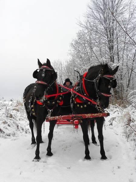 Canadian Team In A Winter Wonderland Art Print