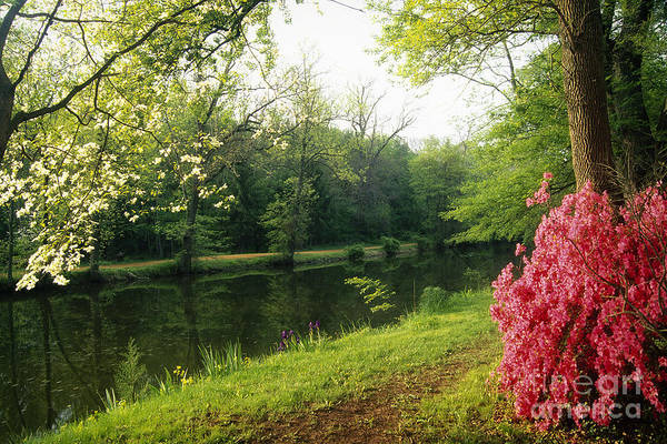 Canal Spring Scenic Art Print